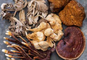 Wat zijn medicinale paddenstoelen?